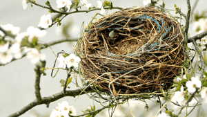 New Empty Nesters – Now What?